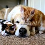 お昼寝中、起きた子猫の自由な行動に何も抵抗しないワンコの姿にほっこり♪
