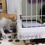 大勢のネコが子犬を観察している姿がおもしろい(笑)