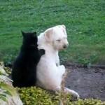 労をねぎらうかのような猫と犬のやり取りが微笑ましい♪