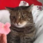 どうしたの!?猫の頭に花を置いてみた反応が面白い(笑)