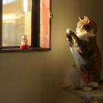 おもちゃの招き猫に影響を受けて自分も立派な招き猫を目指す猫が笑える