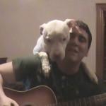 「いい歌だワン!」飼い主さんの一番のファンはペットのピットブル犬♪