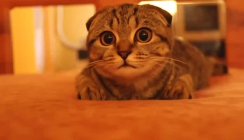 ホラー映画をドキドキしながら見る猫の姿が笑える(笑)